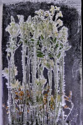 * Цветы для Снежной Королевы II* цветы букет лед
