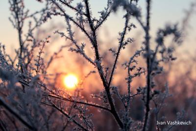 мороз и солнце мороз и солнце