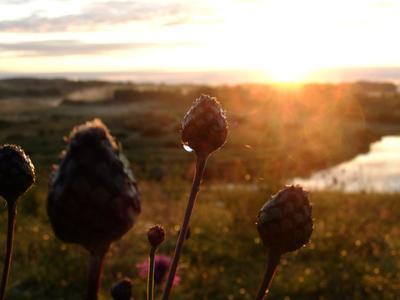 Рассвет рассвет солнце цветы капля блики Пушгоры макро