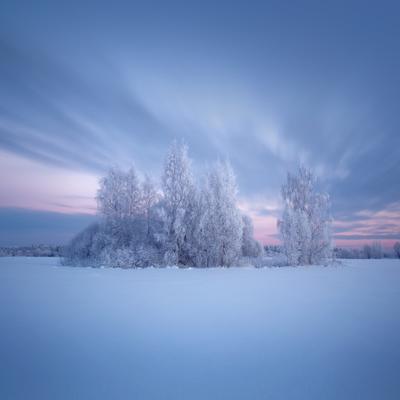 Укутал синий иней снег иней закат березы подмосковье свет longexposure nd1000