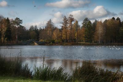 На Белом озере Гатчина осень пасрк