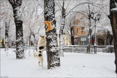 * * * кото-street