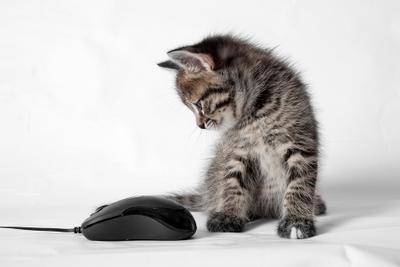 *** кот нок мышка