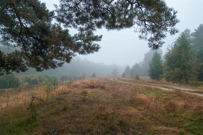 Туманом - тишина, ласкает осень пейзаж осень туман