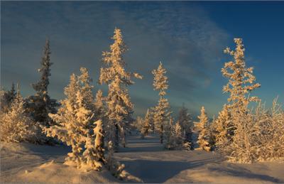 Инея стеклярусом вышит зимний день, в свете бликов солнечных нынче даже тень... в светебликов солнечных ЯНАО Новый Уренгой
