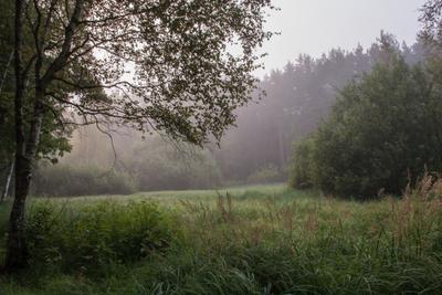 Туманное утро в лесу лес пейзаж деревья туман утро листва