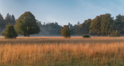 *** лес опушка утро трава осень