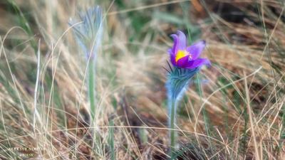 Поздравляю с 8 марта самых красивых ...