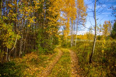 В гостях у осени! (1) Осень Тайга Лес