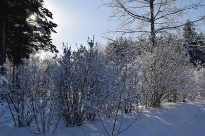 Январь лес природа зима снег деревья январь