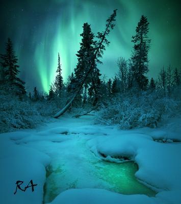 Forest Guard Aurora borealis Кольский полуостров Северное сияние Лес forest