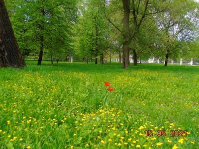 *** Коломна Россия москва область.май каштан Короновирус.природа.город