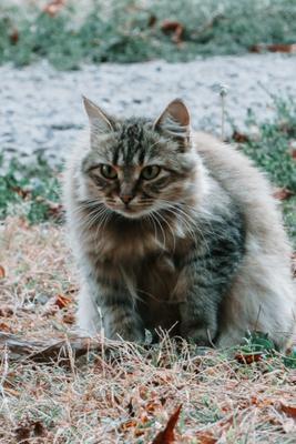 пушистый друг кот дворовой портрет кота животные