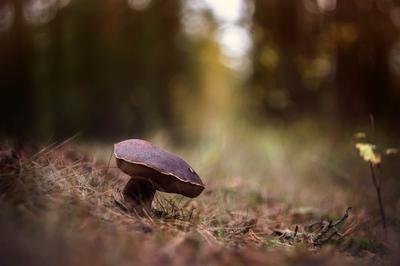 *** гелиос 44-6 природа лес грибы