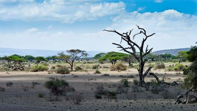 Саваннская саванна  Кения, Амбосели Amboseli