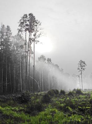 Последние дары солнца Лес осень туман
