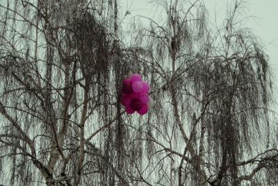 Хорошо погуляли Шарики берёзка дерево весна