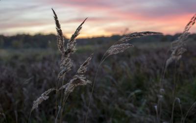 вечерело трава закат