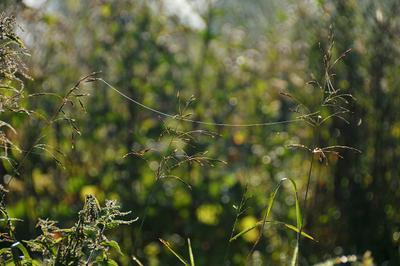 Мостик утро роса паутина
