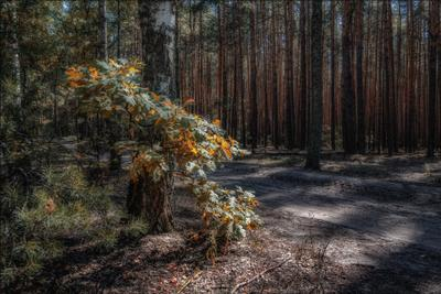 *** пейзаж лес