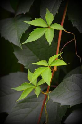 Совершенство природы листья
