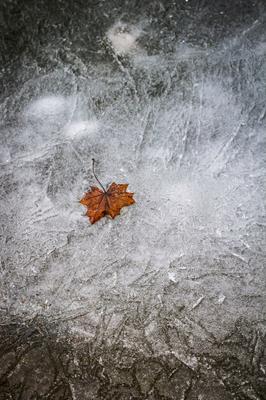 Пора уже лёд клён лист весна зима