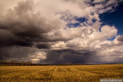Тучи облака тучи поле