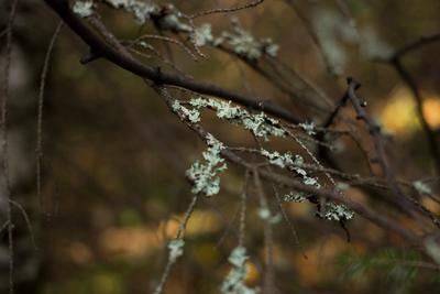 Ветки (twigs) Ветки twigs Ревда природа лес