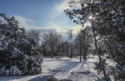Зимний день Зимний парк Красивая природа зимний пейзаж лесная поляна зимняя сказка зима солнечная