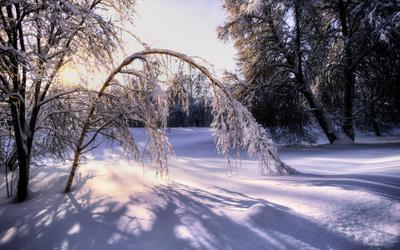 Под снежным гнетом