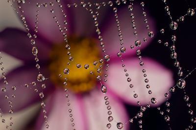 Ожерелье капли макро паутина цветы
