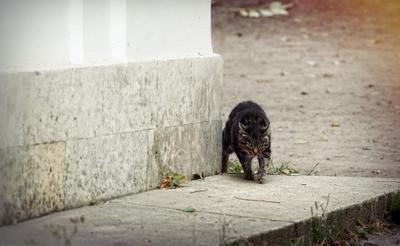 Охотник кошки кот