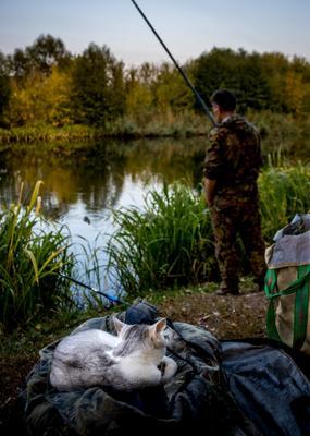 Ждет рыбку кошка река рыбалка