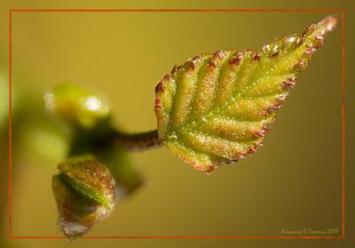 Листочек макро листочек