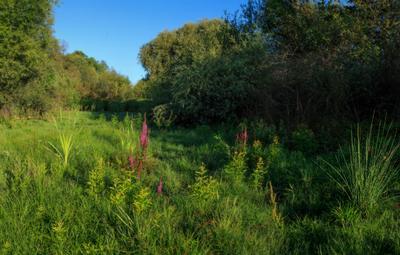 Травы утреннего луга Утро луг цветы травы