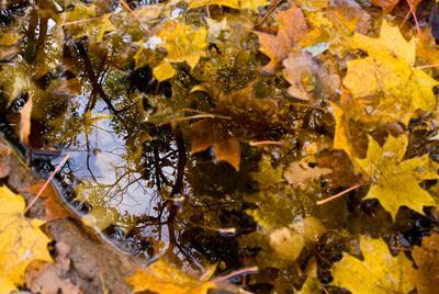 листья......