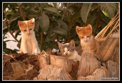 Гнездо котенка котята гнездо Родос