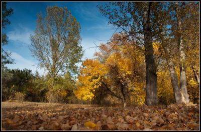 По грибы... осень солнце желтая листва