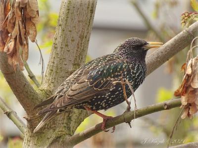 *** животные природа птицы фауна