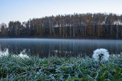 *** утро озеро иней одуванчик рассвет туман