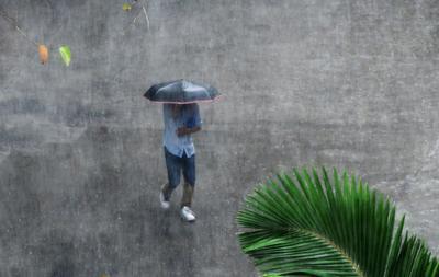 Дождит