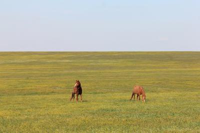 На острове диких лошадей дикие лошади заповедник Ростовский www.treefrog.ru