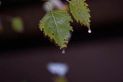 Дождь дождь, осень, листья