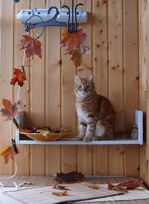И целый год прожит до половины. кот осень лоджия