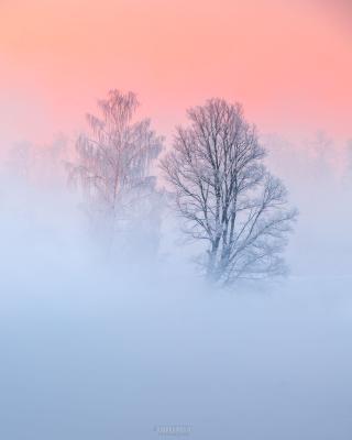 Двое Истра река туман иней рассвет деревья
