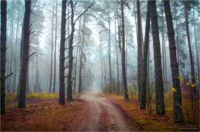 Утро в осеннем лесу.