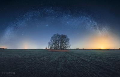 Под звездами Млечный путь дерево ночь поле