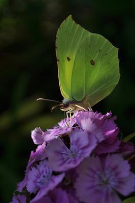 желтая бабочка лето зелень тепло