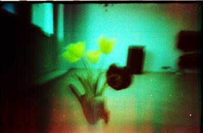 без названия тюльпаны
