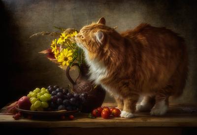 Запахло осенью... натюрморт композиция постановка сцена кот питомец друг любимец рыжий цветы букет урожай